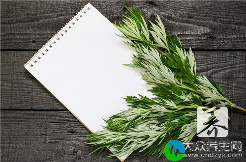 野艾草的功效和作用有哪些?