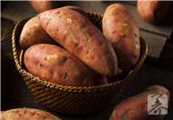红薯跟什么相克