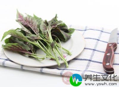 野苋菜含有大量的维生素、胡萝卜素等