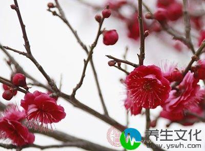 四川成都东山客家雨水节上,有个民俗是女儿给父母、女婿给岳父母送节