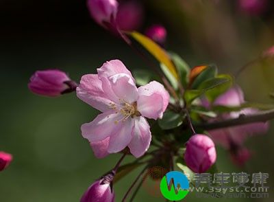 春分是反映四季变化的节气之一
