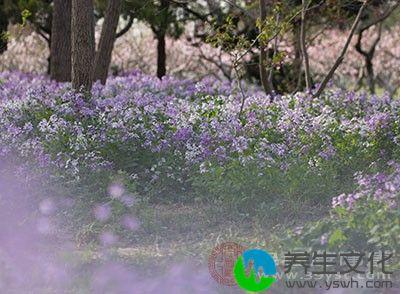 从古代习俗来看,民间花神的生日与春分十分接近