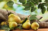 糖尿病人吃什么水果 四种水果能有效降血糖