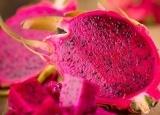 火龙果抗衰老防癌  这样的火龙果才香甜多汁