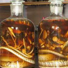 地黄三蛇酒